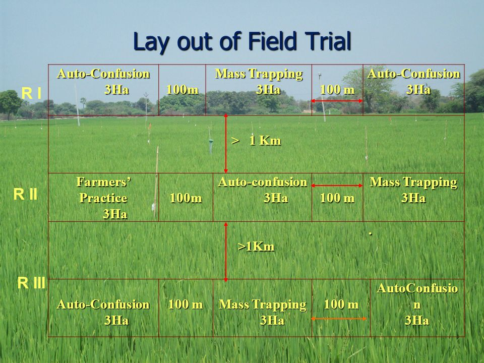 Lay out of Field Trial R I R II R III Auto-Confusion 3Ha 100m