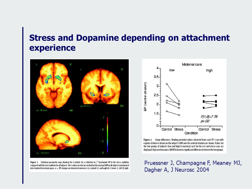 Stress and Dopamine depending on attachment experience