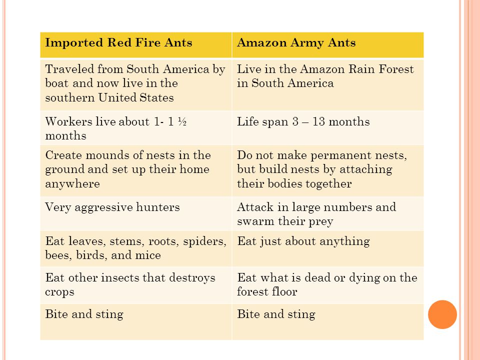 Army ants of the Amazon This short presentation was created