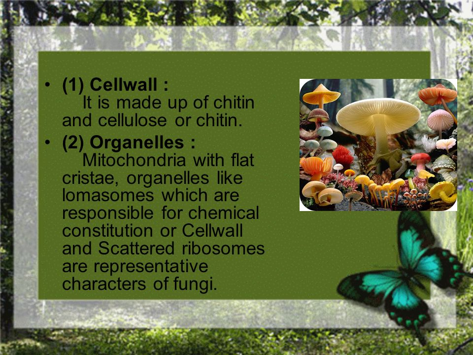 (1) Cellwall : It is made up of chitin and cellulose or chitin.