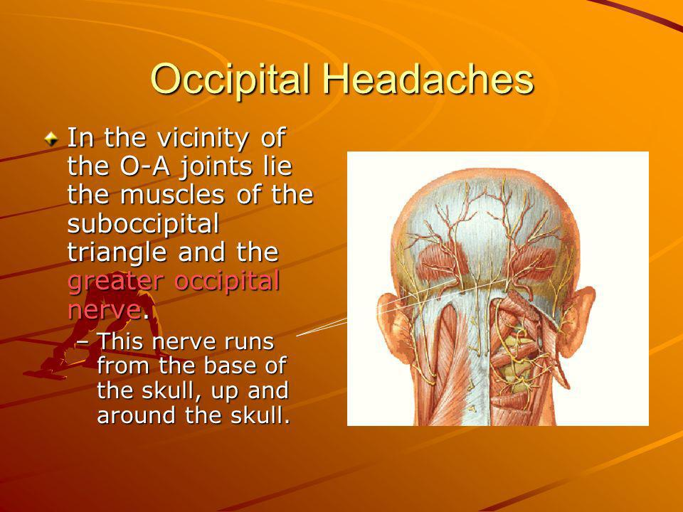 Occipital Headaches In the vicinity of the O-A joints lie the muscles of the suboccipital triangle and the greater occipital nerve.