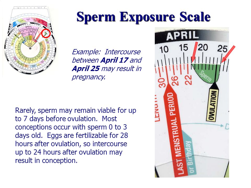 Sperm Exposure Scale Example: Intercourse between April 17 and April 25 may result in pregnancy.