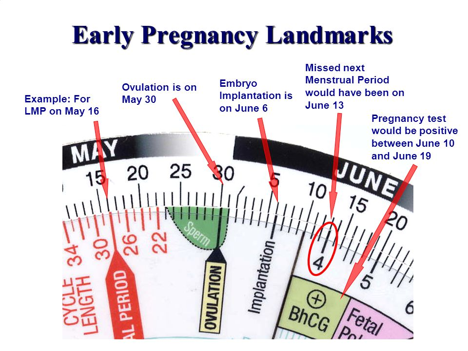 Early Pregnancy Landmarks