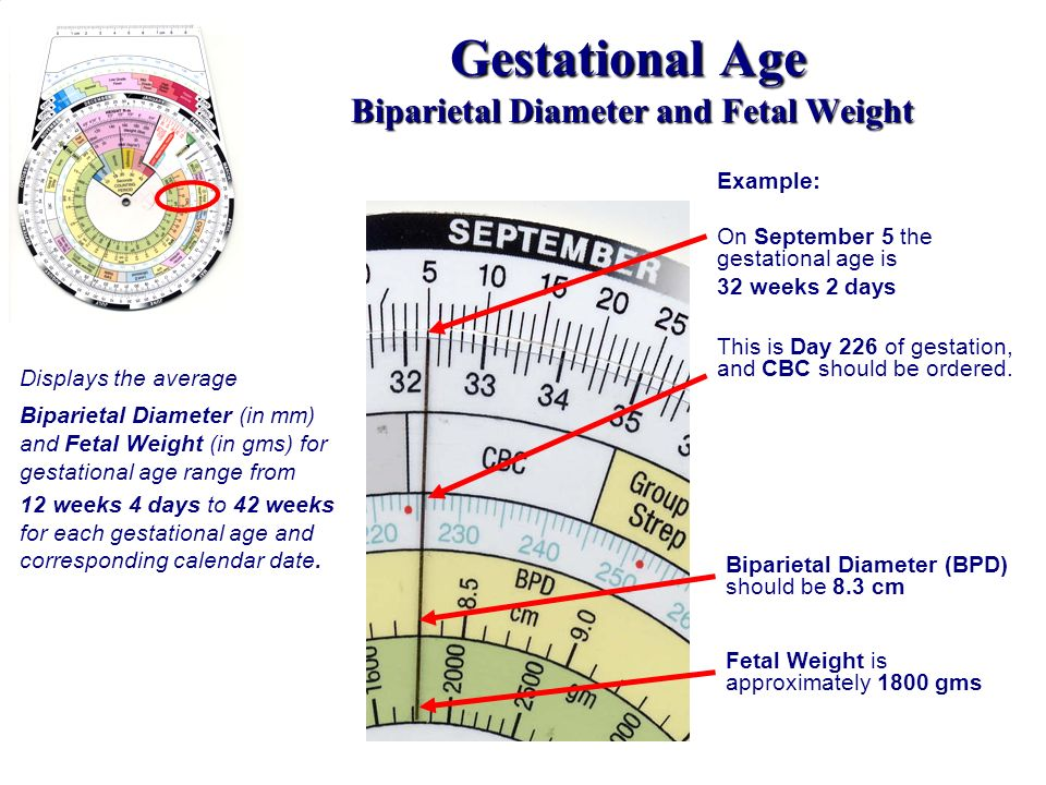 Gestational Age Biparietal Diameter and Fetal Weight