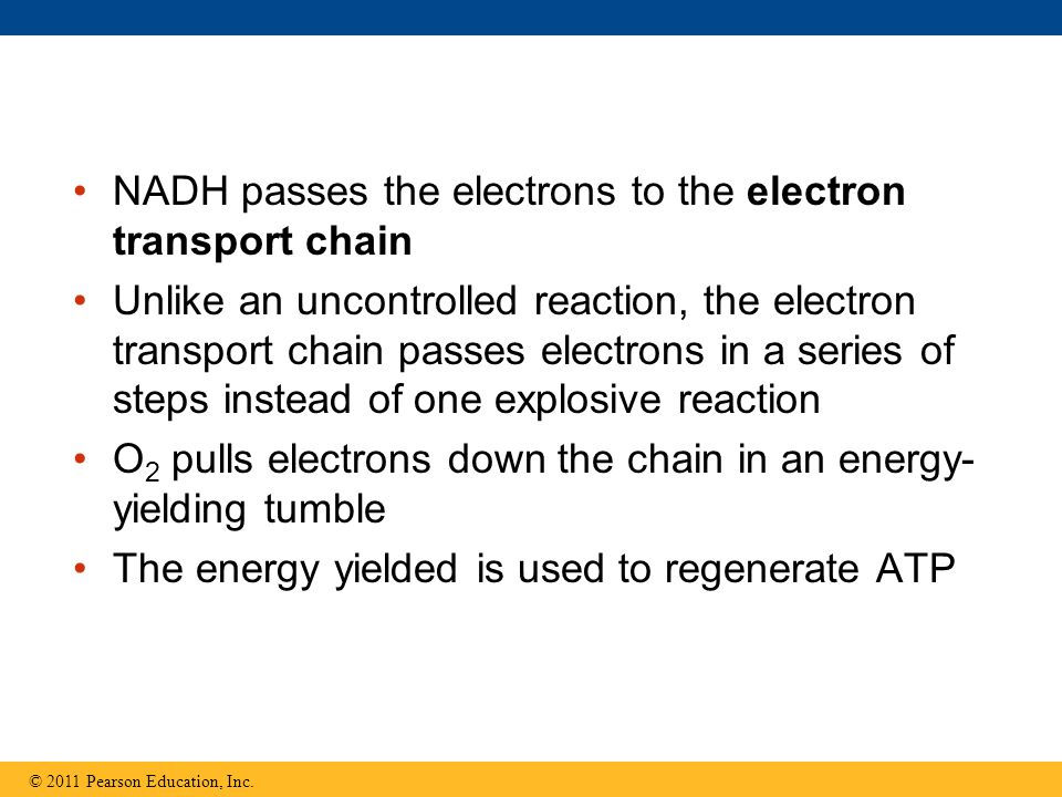 NADH passes the electrons to the electron transport chain