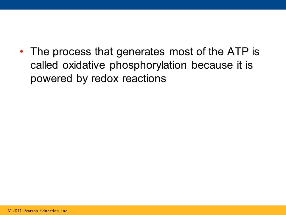 The process that generates most of the ATP is called oxidative phosphorylation because it is powered by redox reactions