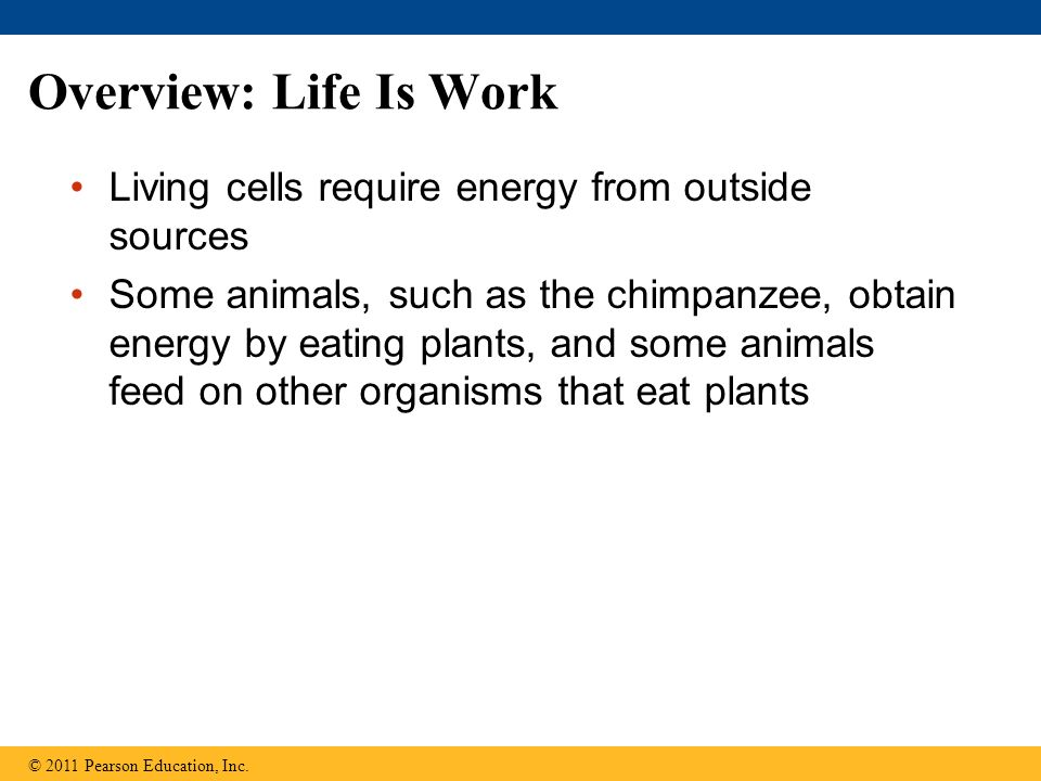 Overview: Life Is Work Living cells require energy from outside sources.