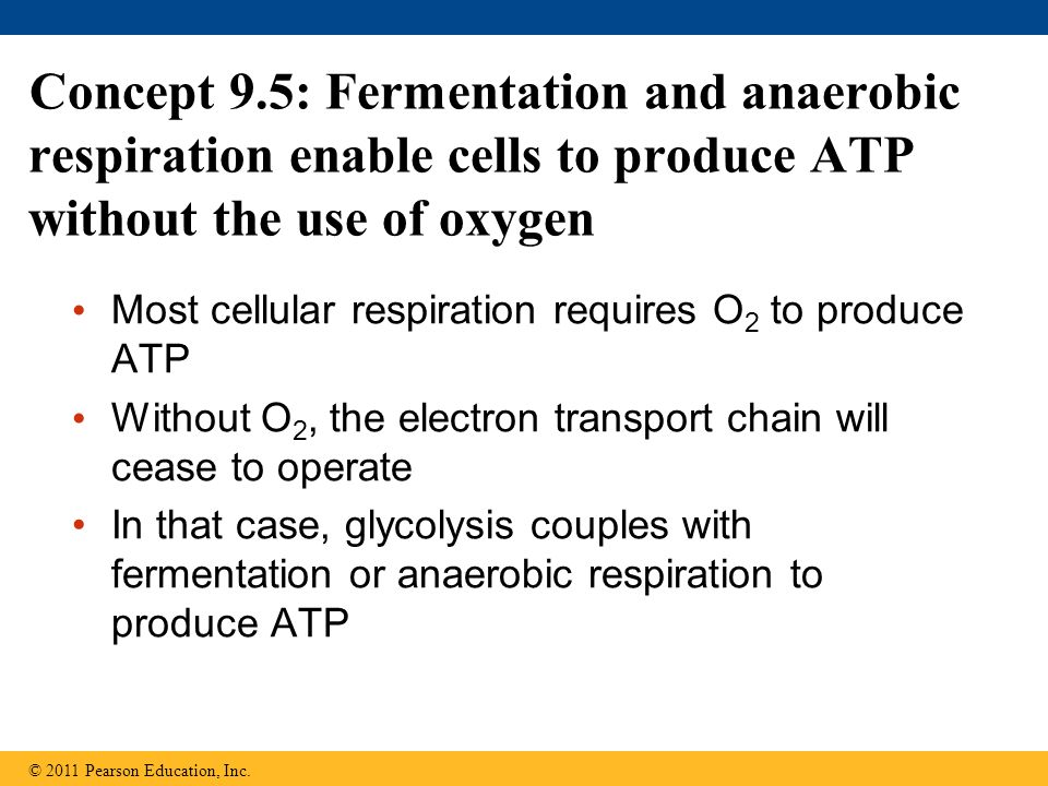 Concept 9.5: Fermentation and anaerobic respiration enable cells to produce ATP without the use of oxygen