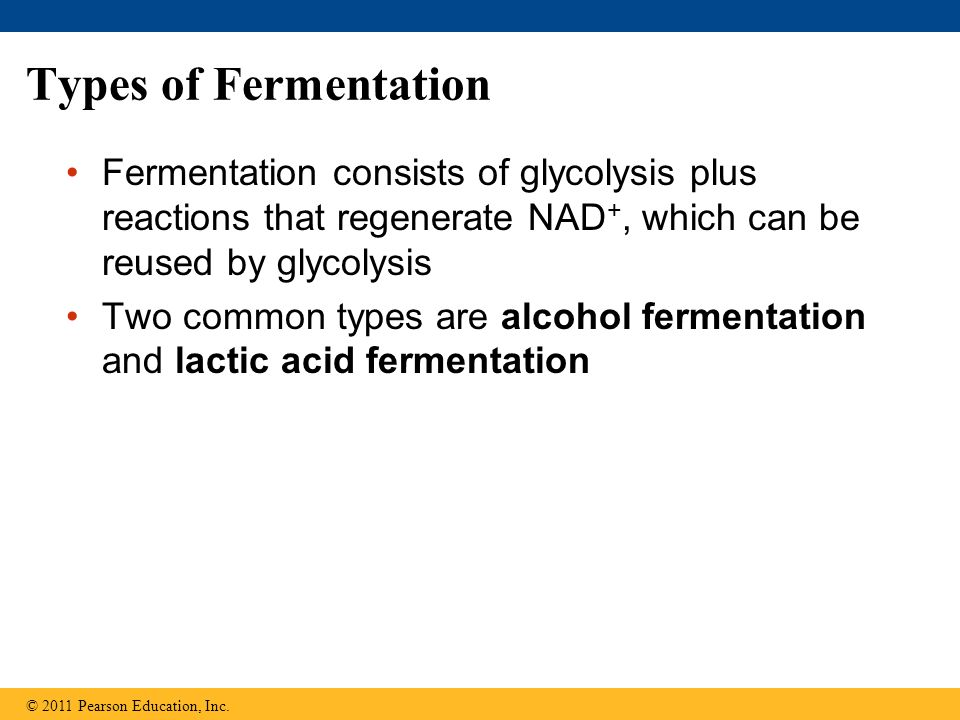 Types of Fermentation Fermentation consists of glycolysis plus reactions that regenerate NAD+, which can be reused by glycolysis.