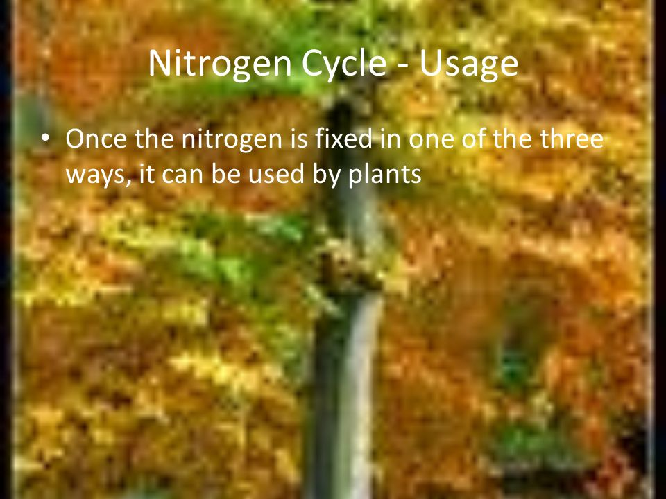 Nitrogen Cycle - Usage Once the nitrogen is fixed in one of the three ways, it can be used by plants.