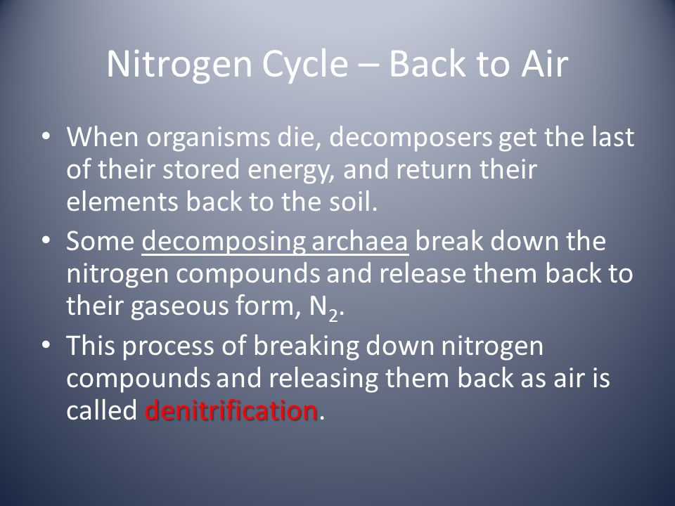 Nitrogen Cycle – Back to Air