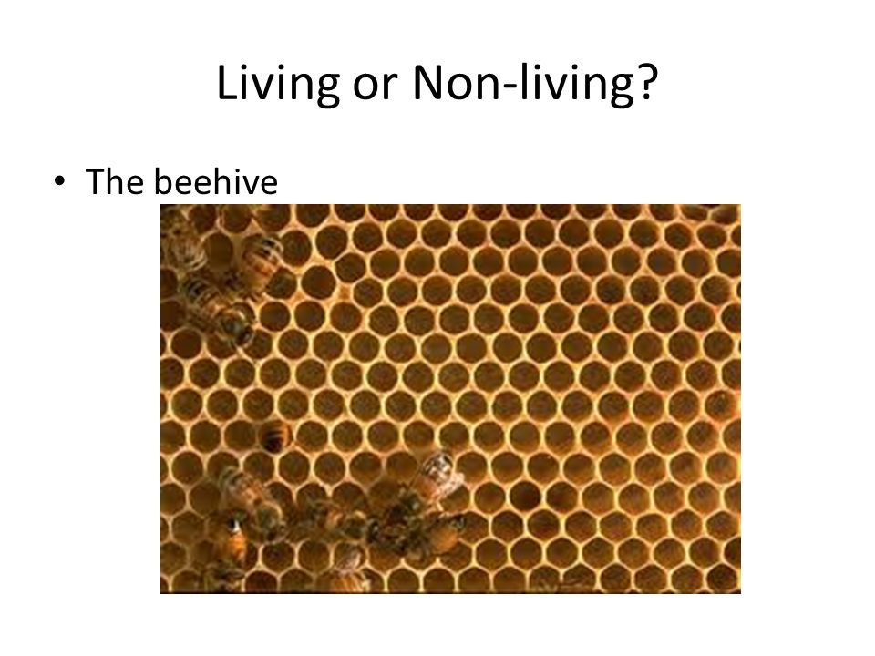 Living or Non-living The beehive