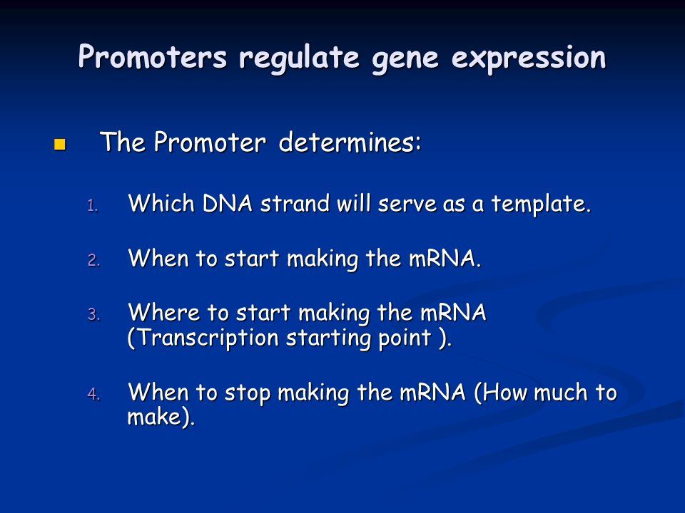 Promoters regulate gene expression