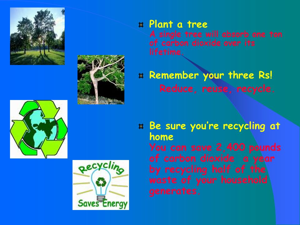 Plant a tree A single tree will absorb one ton of carbon dioxide over its lifetime.