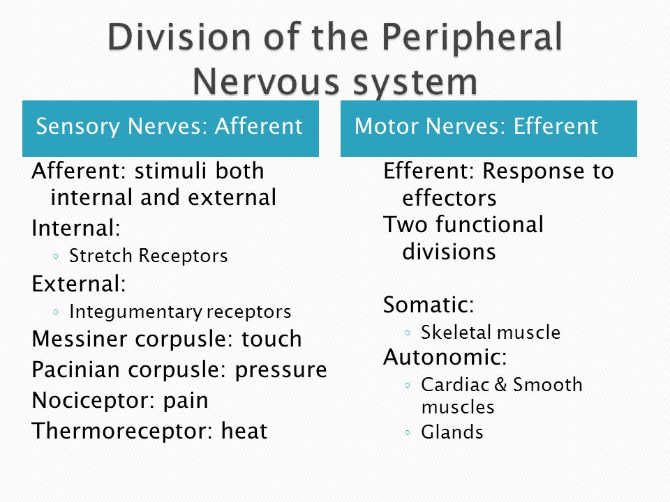 Division of the Peripheral Nervous system