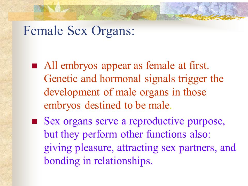 Female Sex Organs: