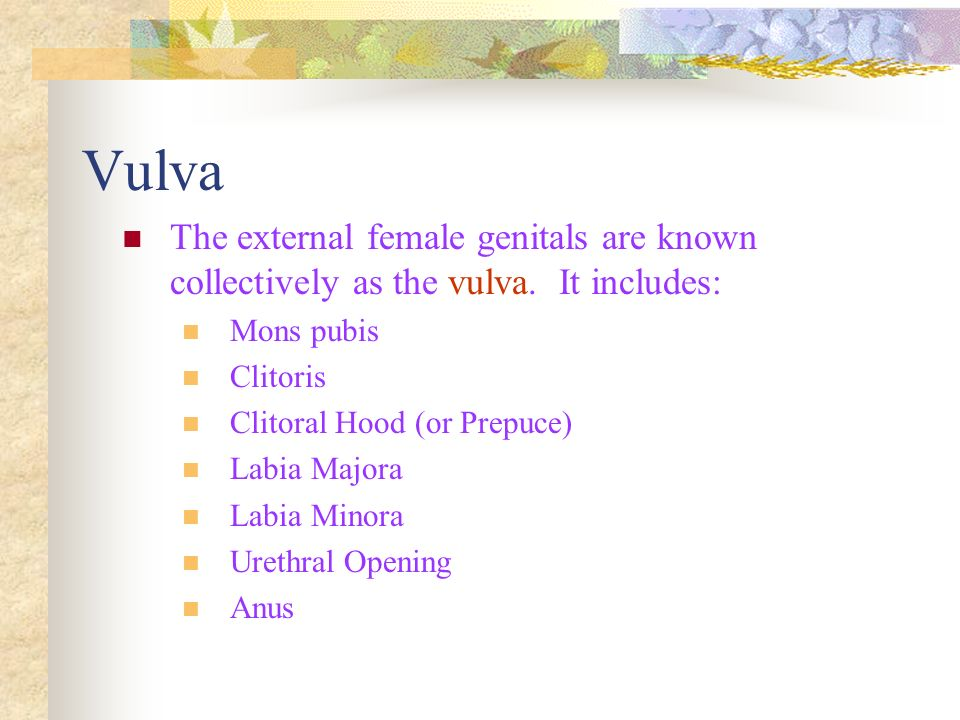 Vulva The external female genitals are known collectively as the vulva. It includes: Mons pubis. Clitoris.