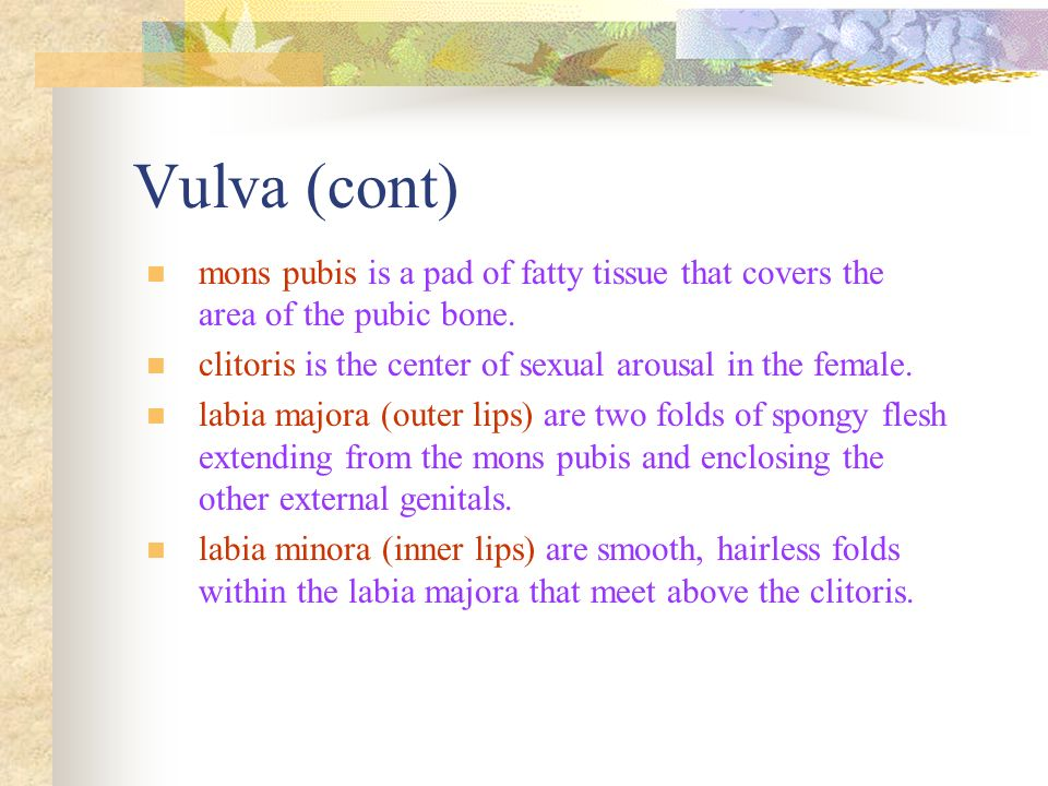 Vulva (cont) mons pubis is a pad of fatty tissue that covers the area of the pubic bone. clitoris is the center of sexual arousal in the female.