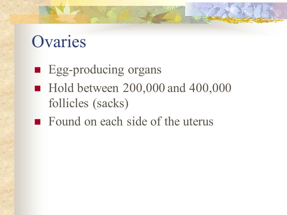 Ovaries Egg-producing organs
