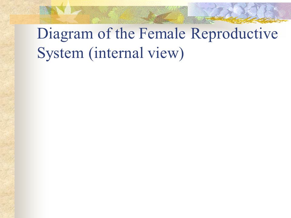 Diagram of the Female Reproductive System (internal view)
