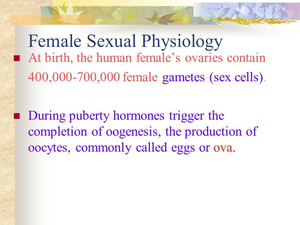 Female Sexual Physiology