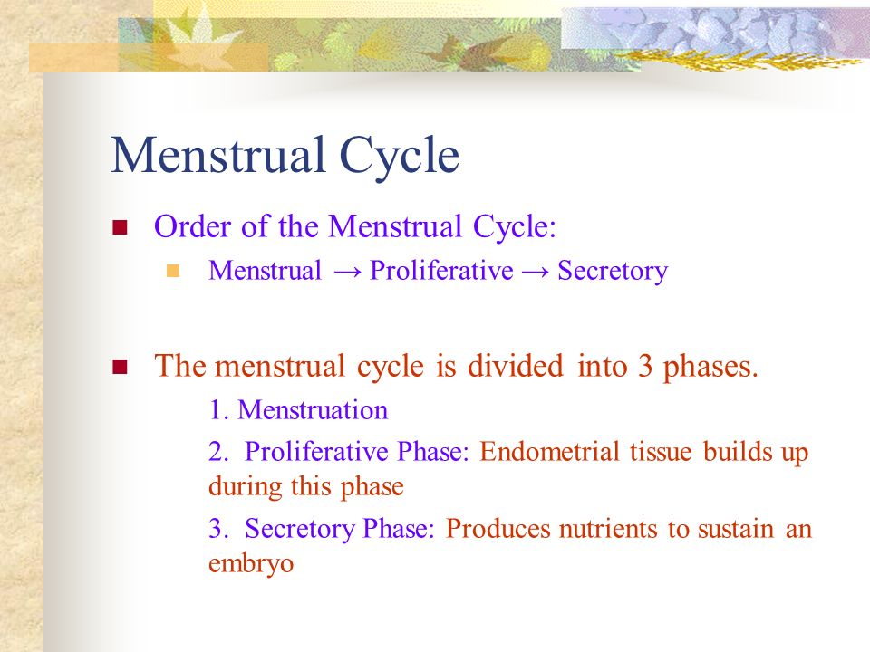 Menstrual Cycle Order of the Menstrual Cycle: