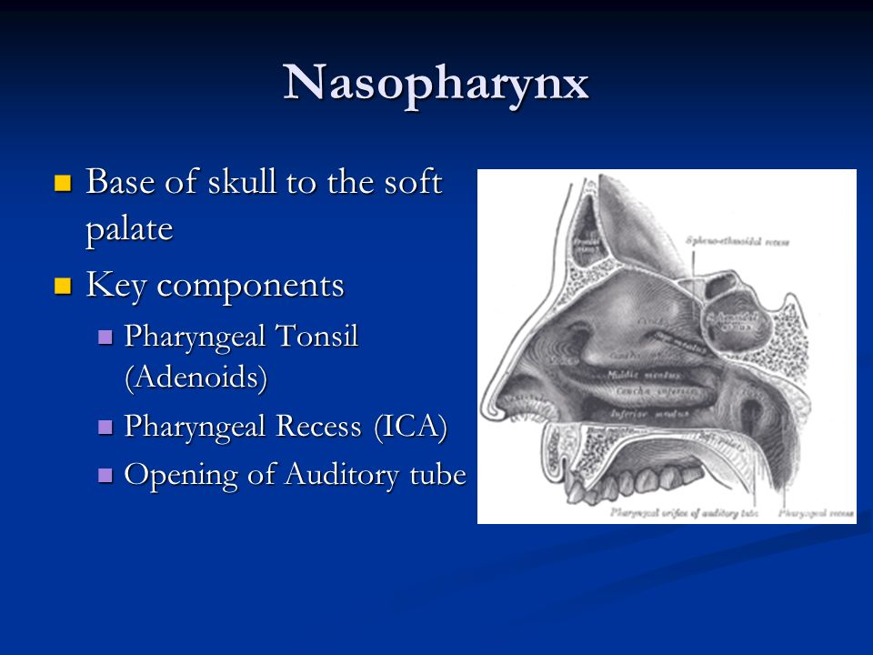 Nasopharynx Base of skull to the soft palate Key components