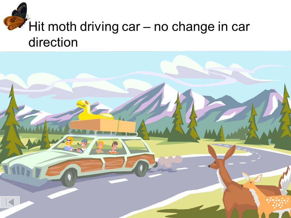 Hit moth driving car – no change in car direction