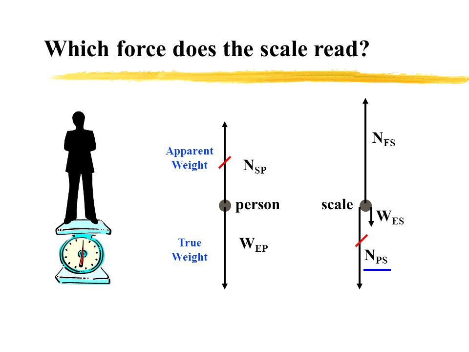 Which force does the scale read