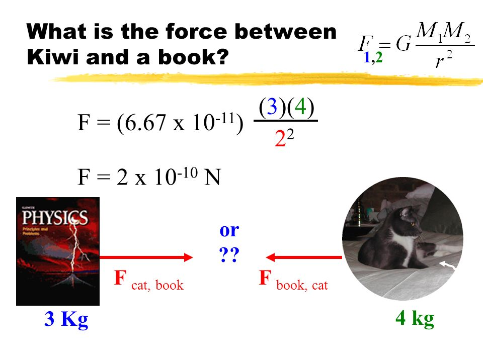 What is the force between Kiwi and a book