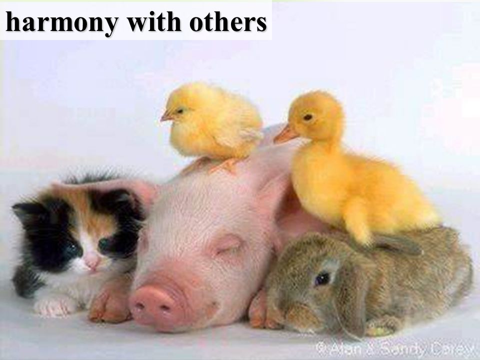 harmony with others