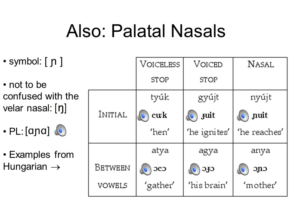 Also: Palatal Nasals symbol: not to be confused with the velar nasal: