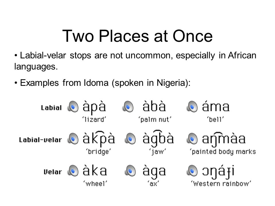 Two Places at Once Labial-velar stops are not uncommon, especially in African languages.