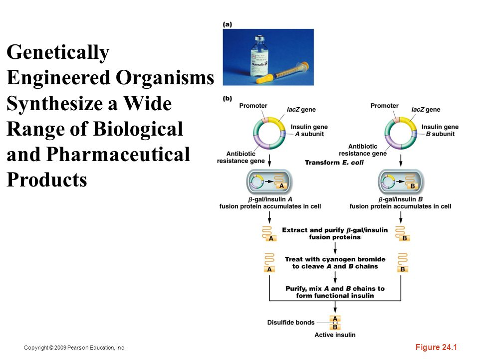 Genetically Engineered Organisms Synthesize a Wide Range of Biological and Pharmaceutical Products