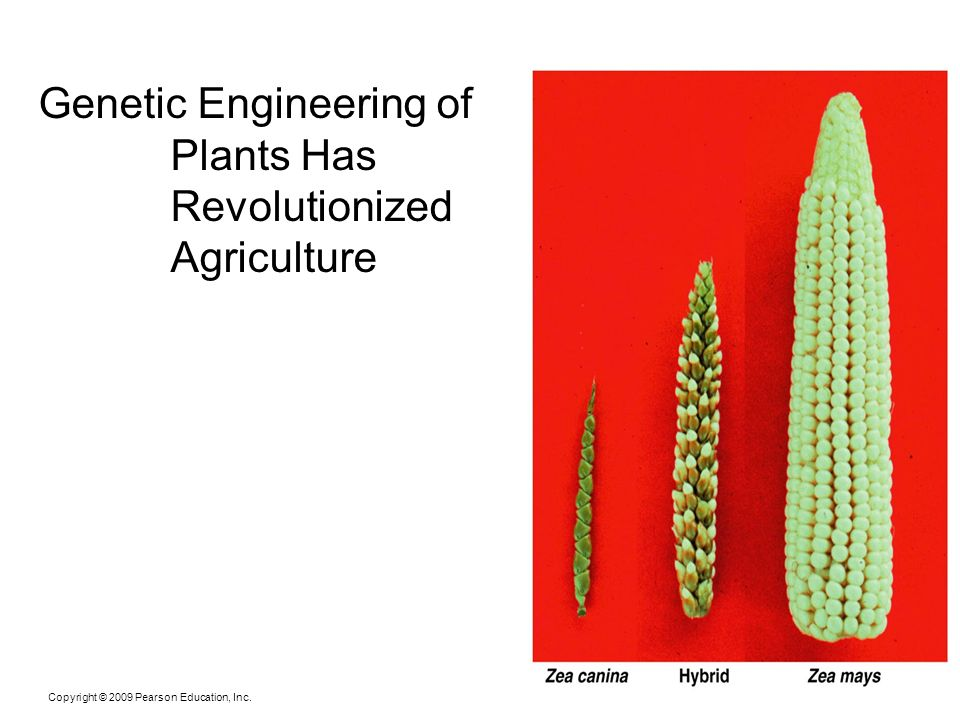 Genetic Engineering of Plants Has Revolutionized Agriculture