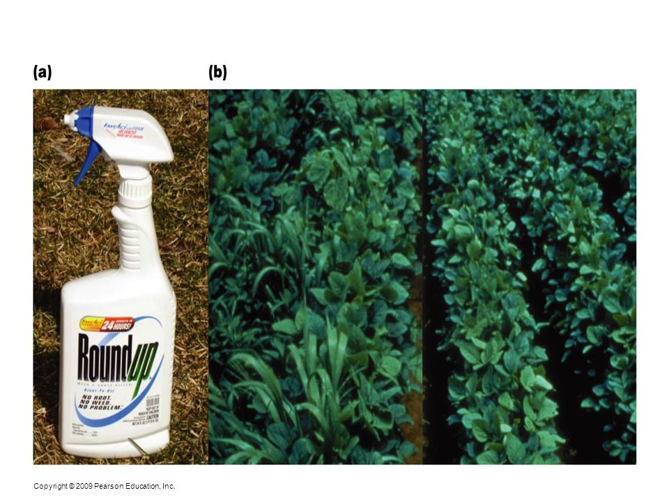 Figure 24-5 (a) Glyphosate is the active chemical in Roundup, a commonly used herbicide.