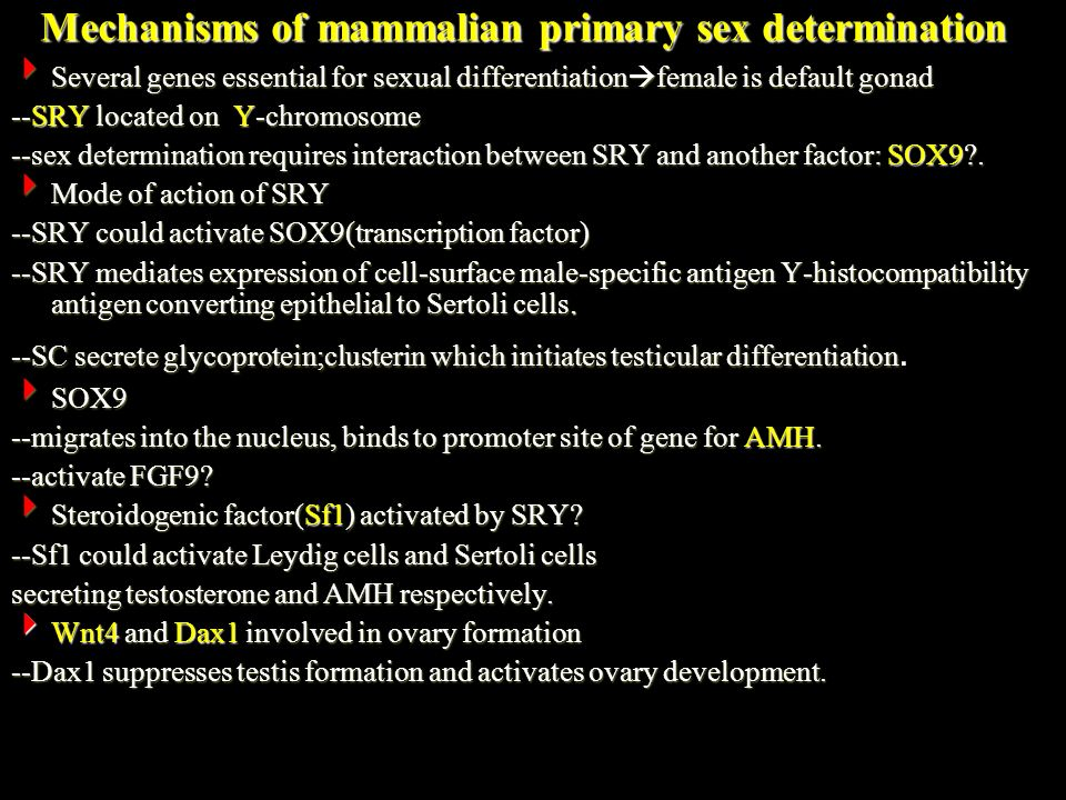 Mechanisms of mammalian primary sex determination