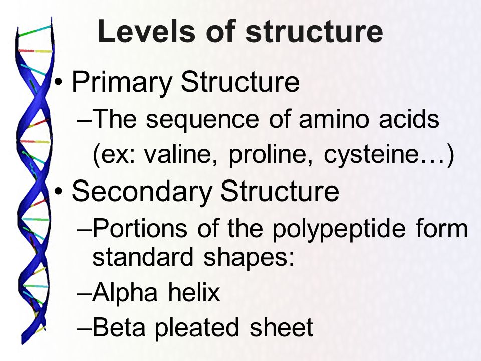 Levels of structure Primary Structure Secondary Structure