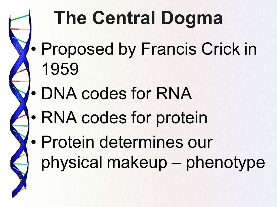 The Central Dogma Proposed by Francis Crick in 1959 DNA codes for RNA