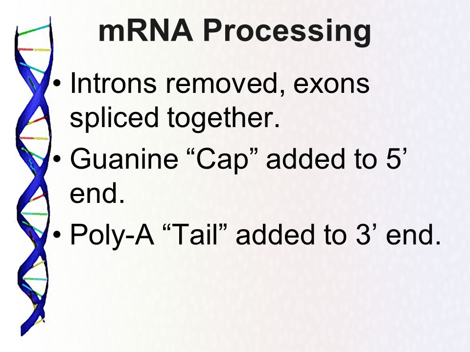 mRNA Processing Introns removed, exons spliced together.