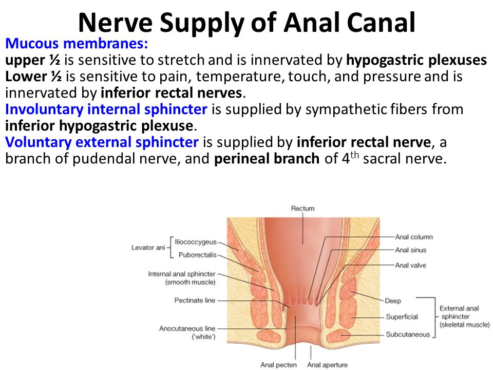 Nerve Supply of Anal Canal