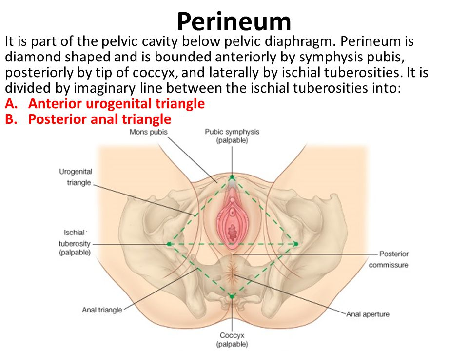 Område mellem anus og pubis - pornobilleder-6299
