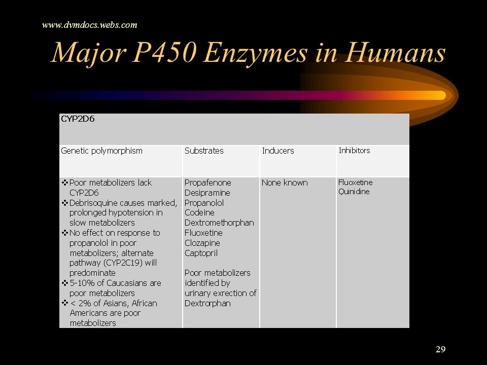 Major P450 Enzymes in Humans
