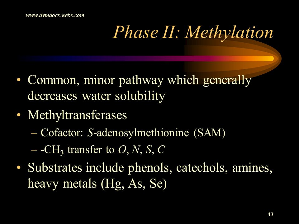 Phase II: Methylation. Common, minor pathway which generally decreases water solubility.