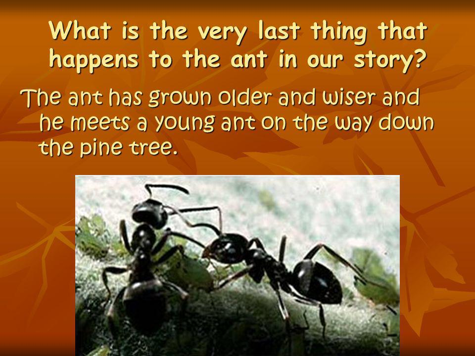 What is the very last thing that happens to the ant in our story