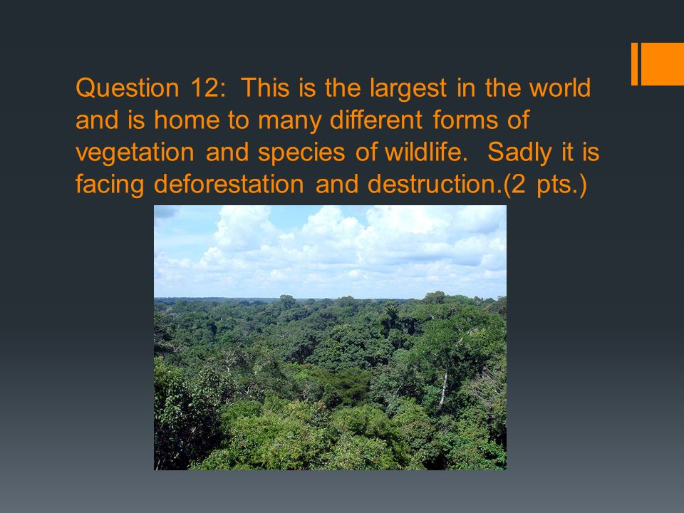 Question 12: This is the largest in the world and is home to many different forms of vegetation and species of wildlife.