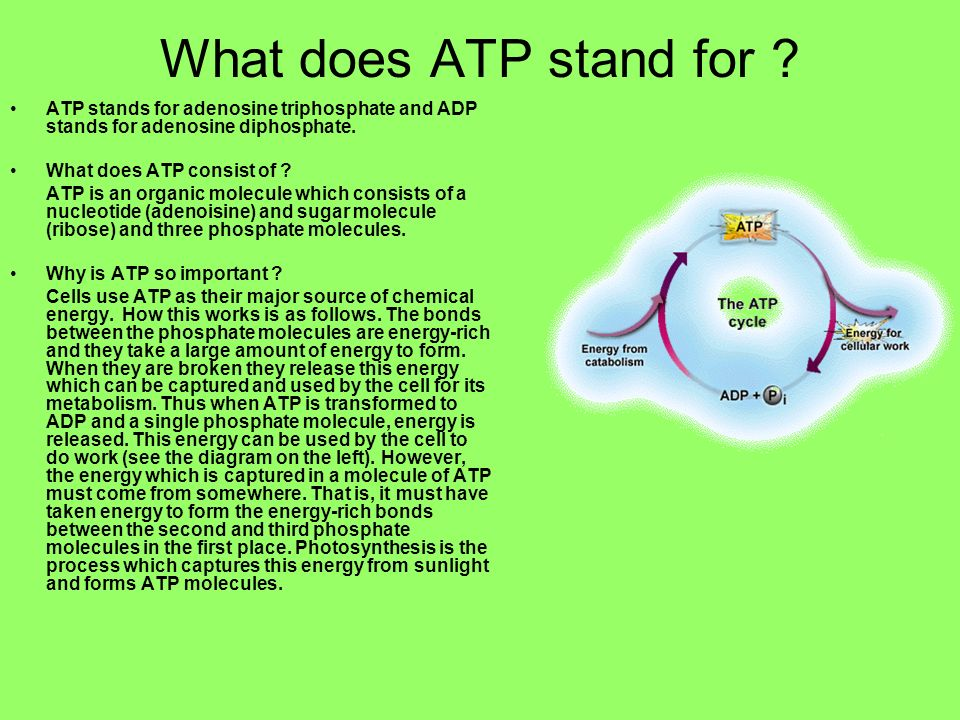 What does ATP stand for ATP stands for adenosine triphosphate and ADP stands for adenosine diphosphate.