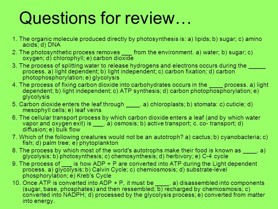 Questions for review… 1. The organic molecule produced directly by photosynthesis is: a) lipids; b) sugar; c) amino acids; d) DNA.