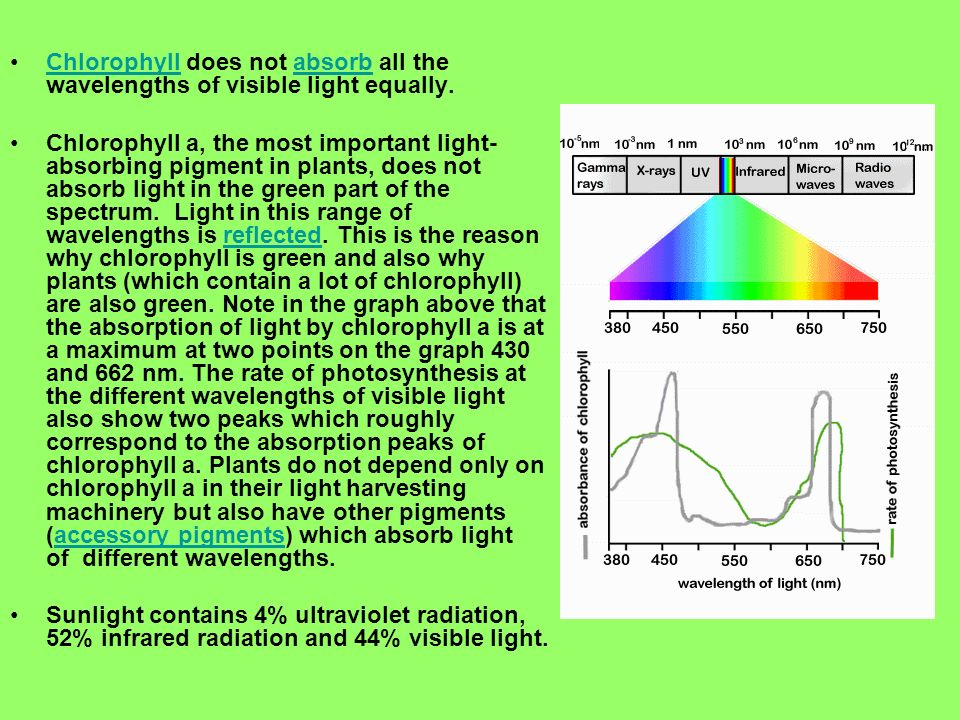 Chlorophyll does not absorb all the wavelengths of visible light equally.