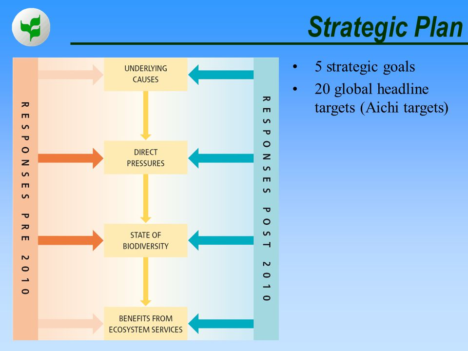 Strategic Plan 5 strategic goals